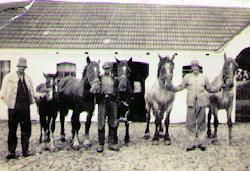 Vollund - Gårdens heste til parade 1946