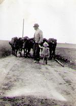 Vollund - Køerne skal på græs - 1943